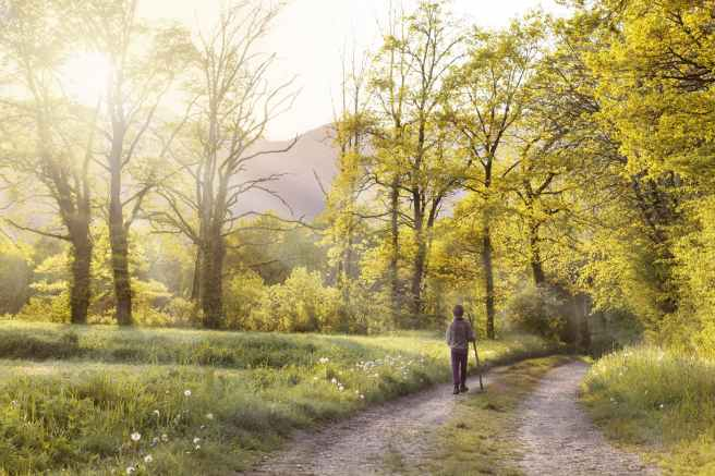 path-andar-field-landscape-160636.jpeg