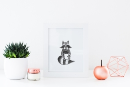 Raccoon_Staged